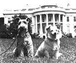 Charlie and Pushinka, President Kennedy's dogs
