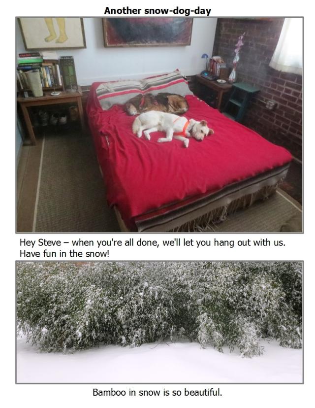 snowdogdayfeb2017